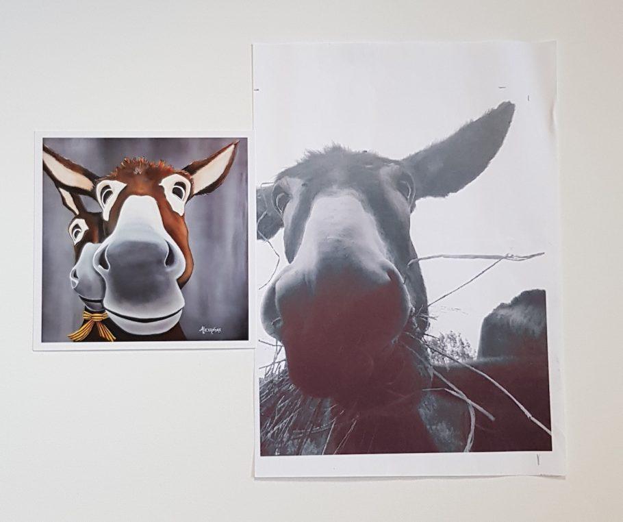 Portrait d'un âne réalisé à l'acrylique et imprimé ensuite en carte postale.