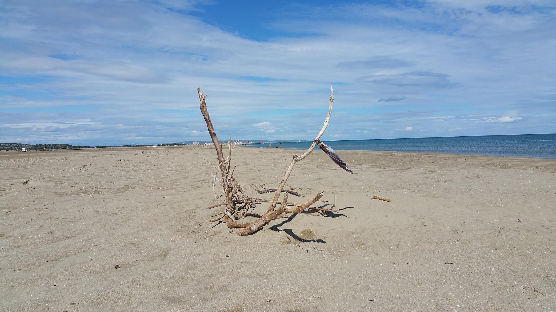 Promenade en bord de mer pour ramasser du bois flotté