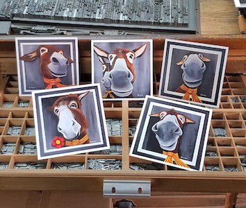 Présentation des portraits des ânes en cartes postales