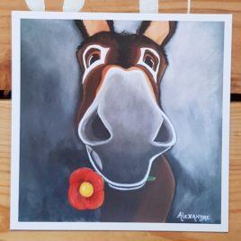La carte postale de Balou représente le portrait d'un âne catalan avec une fleur à la bouche.